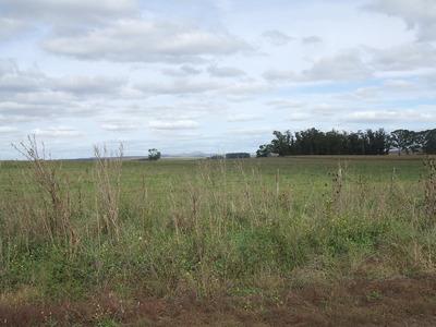 En Napaleufú 50has. De Campo Totalmente Agrícola.