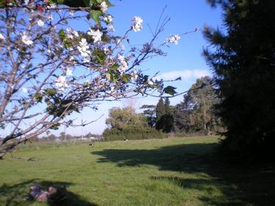 Campo Moreno Apto Loteo V.malaguer 2hct Y Media